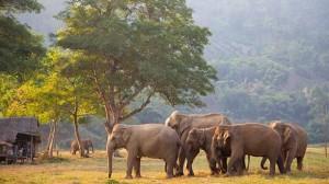 Elephant dans une réserve naturelle de Chiang Mai