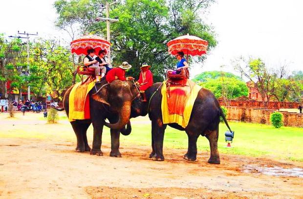 balade-elephant-temple-ayutthaya