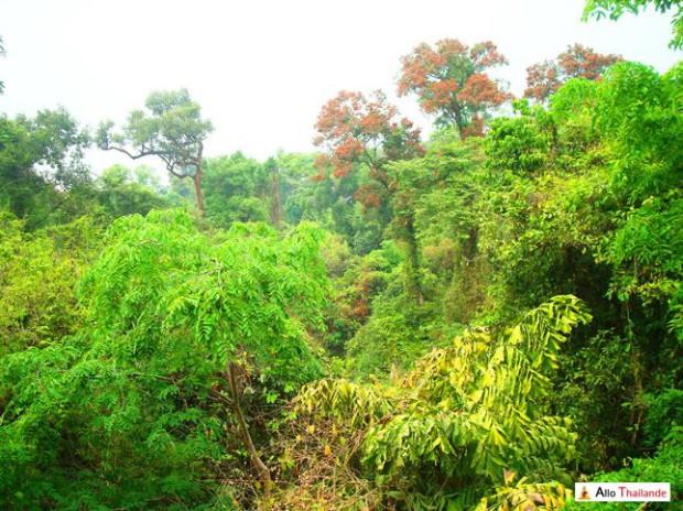 Jungle thaïlandaise vue du haut d'un temple