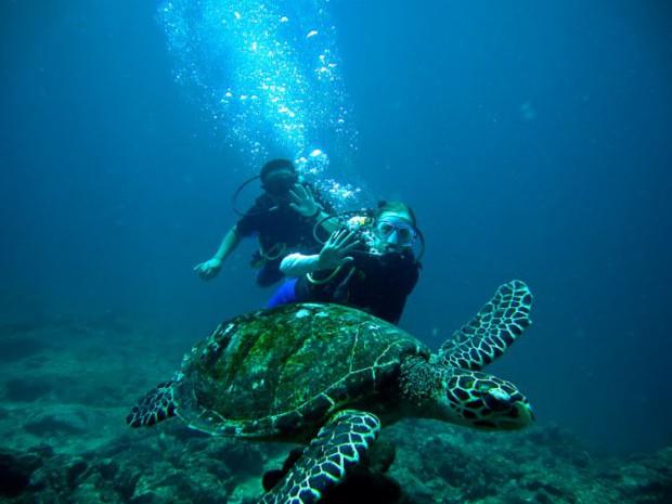Tortue des mers à Koh Phi Phi