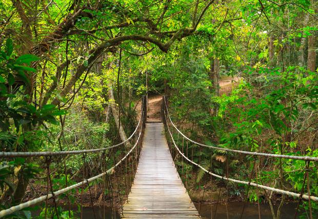 L 39 aventure khao yai parc national de tha lande allo for Fotomurales naturaleza