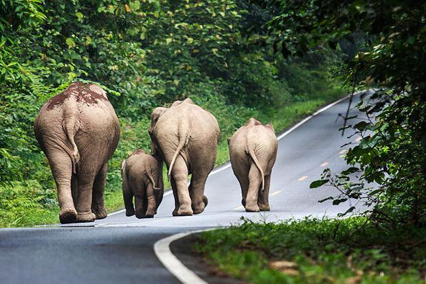 Éléphants se promenant sur une des routes du parc