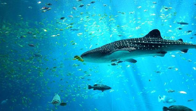 Vue sous-marine lors d'une Plongée à Koh Tao