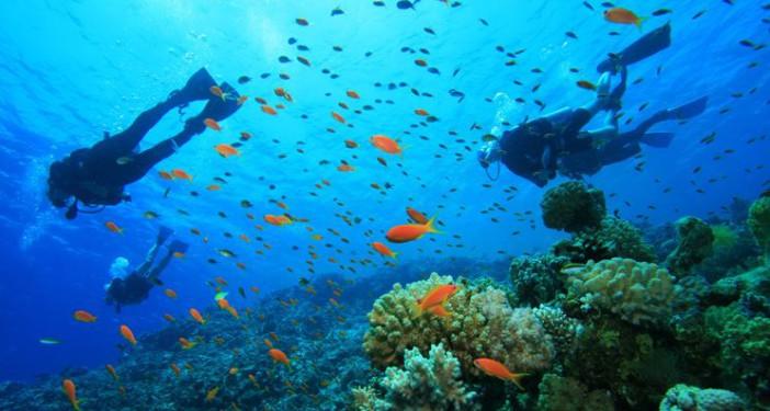 Vue sous marine d'une plongée à Koh Tao