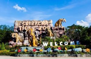 Le Siracha Tiger Zoo à Pattaya