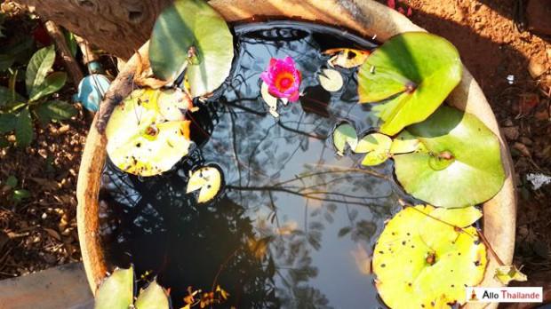 Lotus d'isan