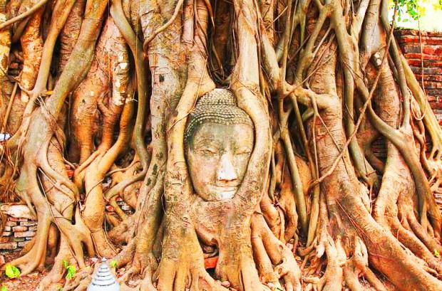 tete-arbre-temple-de-ayutthaya