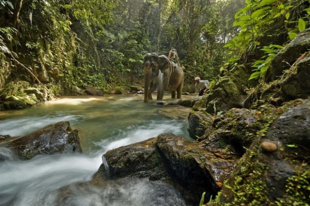Éléphant sauvage à Khao Yai